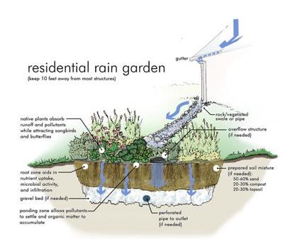 Rain garden for Rain water harvesting